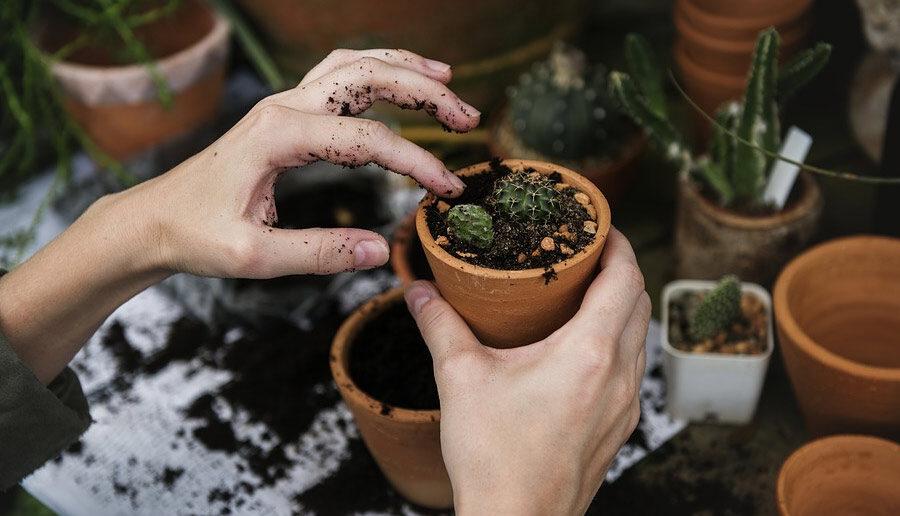 Jonge plantjes potten